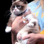 800px-Grumpy_Cat_by_Gage_Skidmore