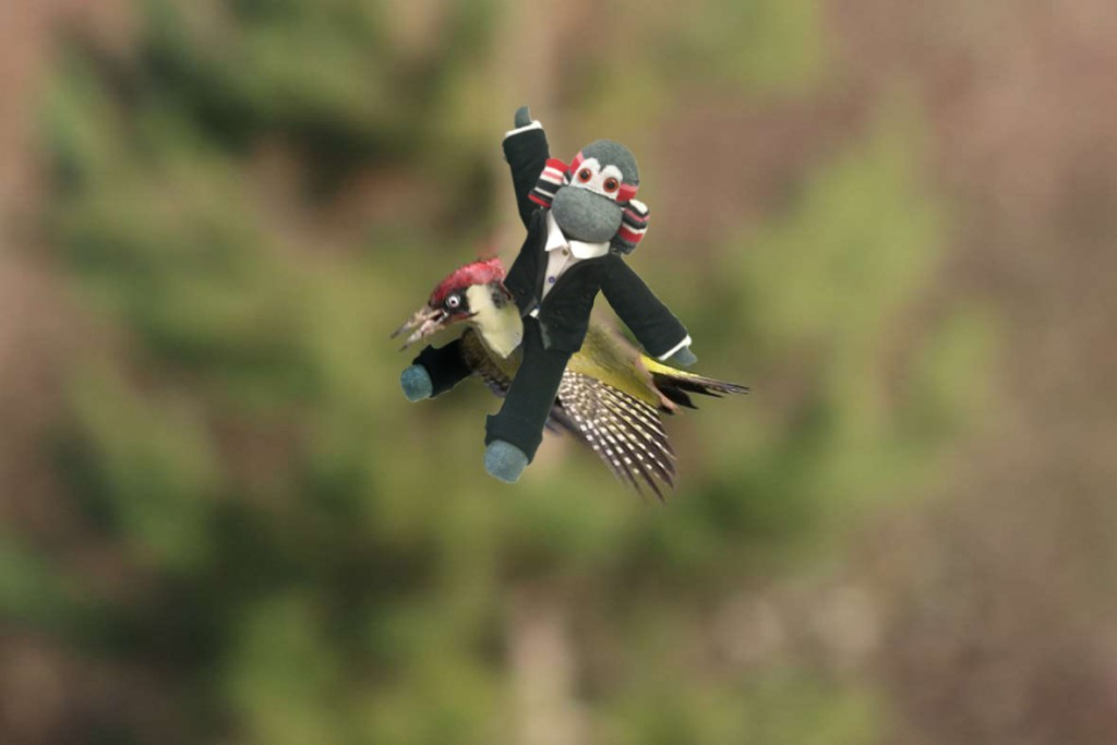 Monkey riding woodpecker